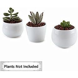 T4U Conjunto de 3 Coleccion Blanco 31 Cerámicos Planta Maceta Suculento Cactus Planta Maceta Planta Contenedor Vivero Maceta Blanco
