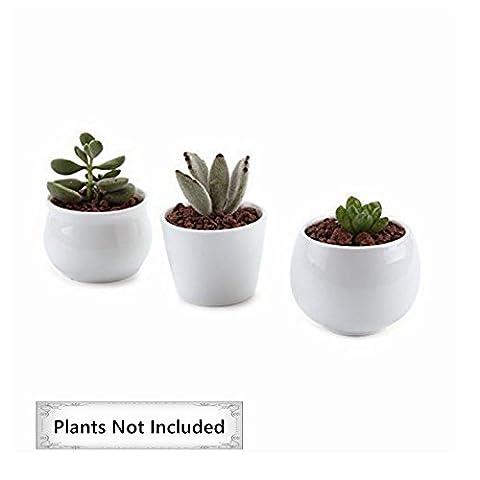 T4U CollectionSammlung NO.31 Céramique Pot Plante Récipient Pépinière Pots Succulents Cactus Plante pots Blanc 3 Pièces