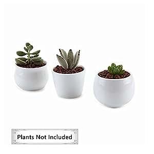 T4U 6.5/7/7CM Pots En Céramique Blanc Série NO.31/Plante Succulente/Plante en Pot/Cactus/Pot De Fleur/Cultiver 1 Paquet de 3