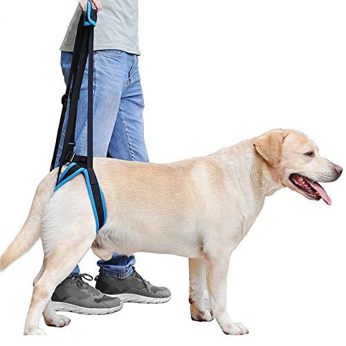 Hunderollstuhl für Hinterbeine Begleitender Hilfsgurt für Haustiere, für Hinterbein-Behinderungsverletzung Schwaches Rehabilitations-Trainingsgürtel für das Bein, Beinumfang 25-64 cm Hund, Katze und a