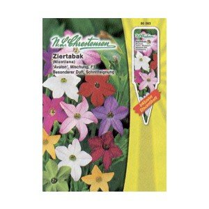 Ziertabak, Nicotiana affinis, Avalon, F1, Mischung - (Portion)