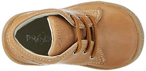 Walker 7070 Bege scuro Bebé Bege Pbd De Primigi Sapatos qt8xnnIBUw