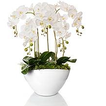 suchergebnis auf f r orchideen gesteck. Black Bedroom Furniture Sets. Home Design Ideas