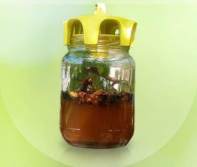 pige-de-cap-pour-gupes-et-frelons-jar-trap-conf-2-pcs