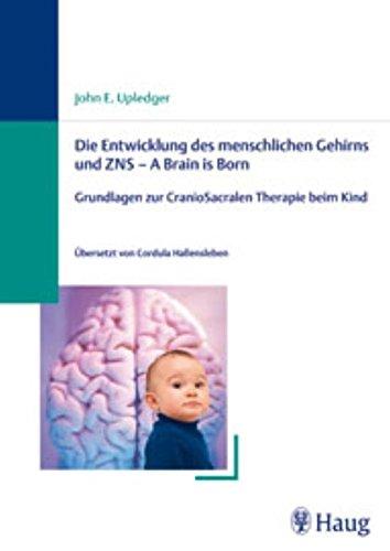 Die Entwicklung des menschlichen Gehirns und ZNS - A Brain is Born: Grundlagen zur CranioSacralen Therapie beim Kind