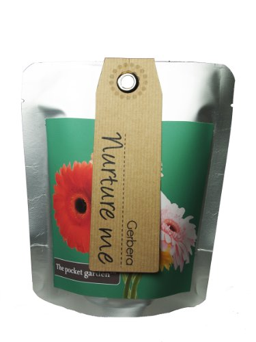 The pocket garden plantes pour jardin miniature - mini gerbera