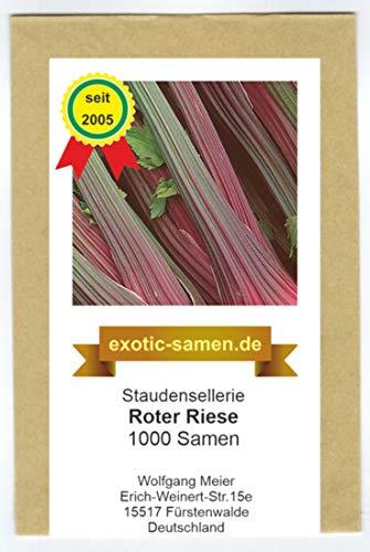 Stangensellerie - Staudensellerie - rote Stiele - großwüchsig - Roter Riese - 1000 Samen