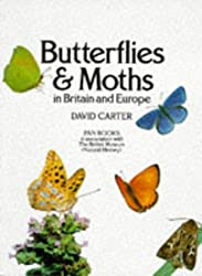 Butterflies and Moths in Britain and Europe