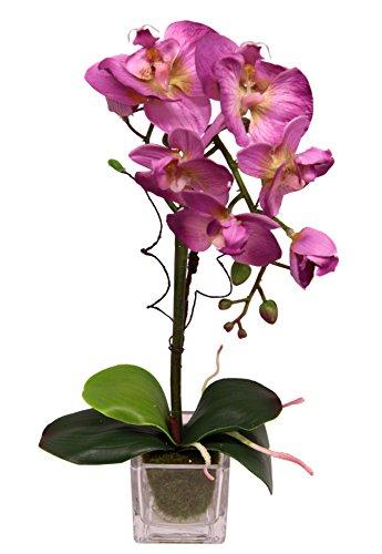 Flair Flower Phalaenopsis im Glas, Stoff, rosa, 35 x 15 x 10 cm