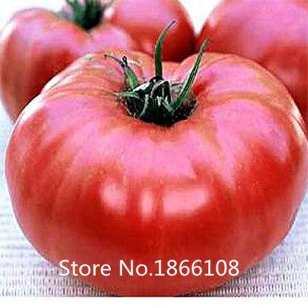 Burgundy : Home &Amp; Garden 200 Mixed Tomato Seeds, Organic Heirloom,Hardy,Heat Resistant, Rich Flavor By Flower Story, Burgundy Heat
