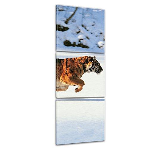 Bilderdepot24 Immagine su telaio a cunei Tigre - 30 x 90 cm set 3 pezzi - Già montato sul telaio, Stampa artistica intelaiata e pronta da appendere