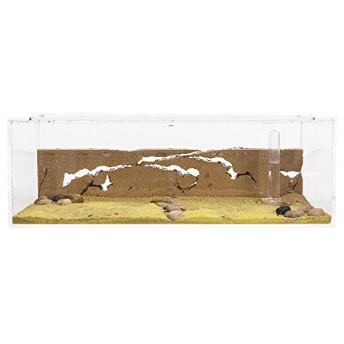 Ant Farm BIG with free Ants and Queen - Educational formicarium for LIVE ants (Ant Farm Queen)