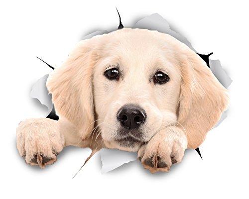 Winston & Bear 3D perro pegatinas - Pack 2 - leerlo Labrador pegatinas para la pared, nevera blanca Labrador pegatinas