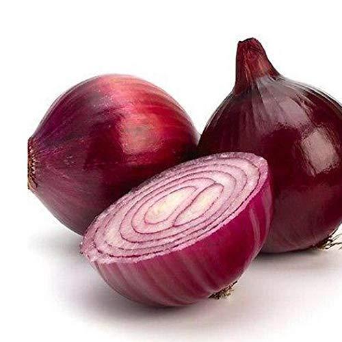 Vobome 100 teile/beutel Riesige Zwiebel Samen Garten DIY Bio Gemüse Pflanze Gemüse