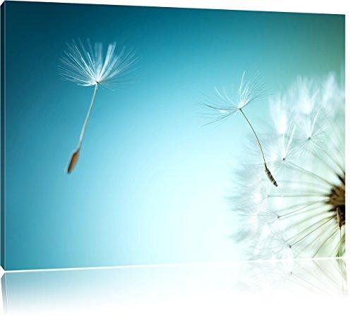 dandelion-scudo-aviatore-pusteblume-formato-80x60-su-tela-xxl-enormi-immagini-completamente-pagina-c