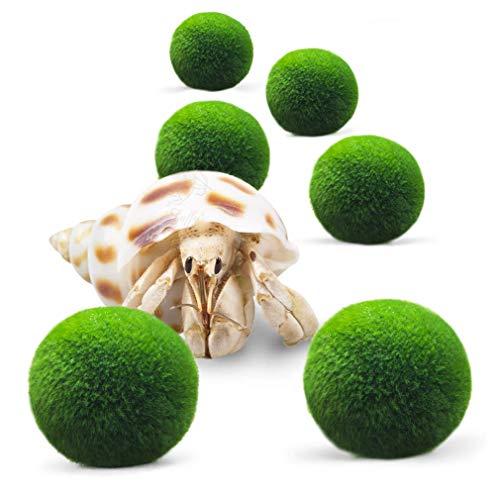 6x palline di muschio Nano Marimo, piante vive