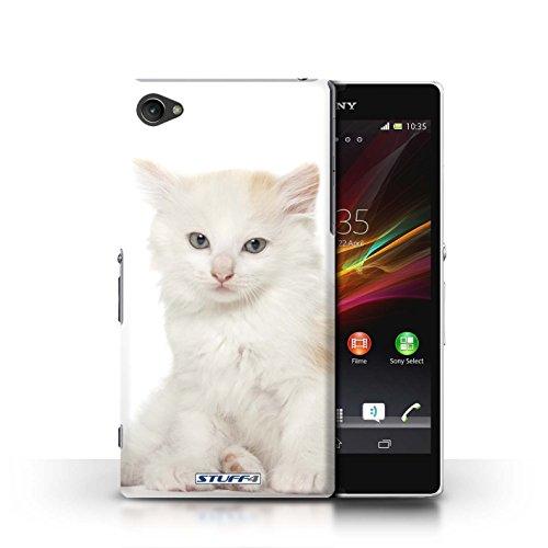 Kobalt® Imprimé Etui / Coque pour Sony Xperia Z1 Compact / American Shorthair conception / Série Espèces de chats Kurillian