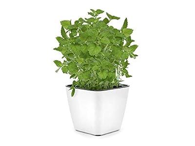 Katzengras-Anbaukit (Cat grass growing kit) Domestico, All-In-One-Set, Set mit Selbstbewässerungstopf, Substrat und Samen (Weiß) von VISO TRADE auf Du und dein Garten