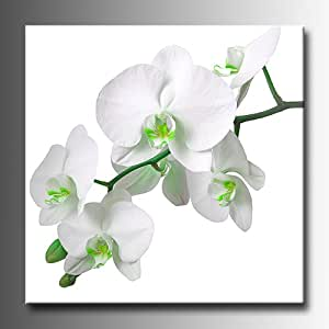 """Large Square White Orchids with stylised Green Canvas Picture Print. 3/4"""" Wooden Frame. 20""""x 20"""". Wall Art."""