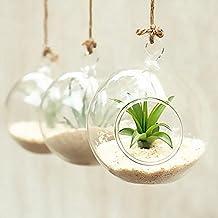 Terrarium plante - Boule en verre pour plante ...