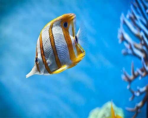 LMTQWC DIY 5D Diamant Malerei Kits Für Erwachsene,Aquarium Korallen Strass Stickerei Kreuzstich Bilder Kunsthandwerk Für Home Wall Decor 40X50CM