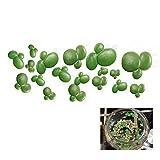 GOOTRADES 18 Stk-Pack Plastik Aquarium Künstliche Duckweed Kleine Wasserlinse, Schwimmende Pflanzen, Grün (2 Pack)