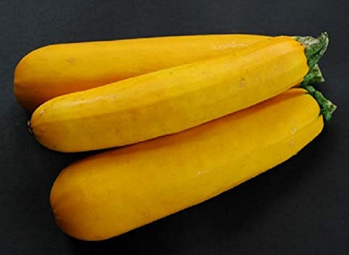 1g-approx-7-yellow-zucchini-seeds-atena-polka-h-extremely-dietary-helps-to-reduce-the-weight