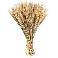 Caractéristiques du produit:  Cueillies à la main pour la qualité cultivée dans le vrai paquet de blé séché à la ferme comprennent 100 tiges de blé.  Le blé Triticum blond naturel est idéal pour les bouquets, les centres de table et les compositi...
