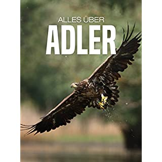 Alles über Adler