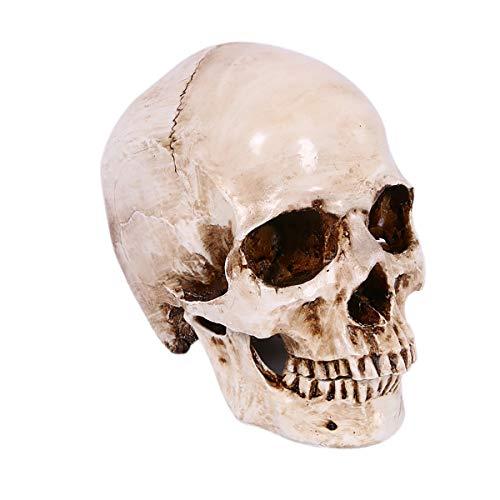 Wei Xi 1:1 menschliches Anatomisches Totenkopf-Modell, Lebensgröße, menschlicher Totenkopfkopf Knochen Nachbildung für Halloween Dekoration