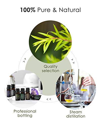 VicTsing 6*10ml Aceites Esenciales para Difusor, 100% Puro Natural Set de Regalo de Perfume de Aceites, - Naranja Dulce,  Lavanda,  Arbol de Té,  Hierba de Limón,  Eucalipto y Menta, etc.Incoloro