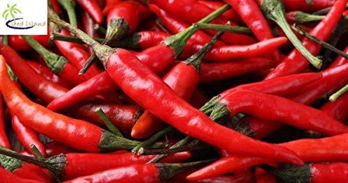 Samen Keimung: 5000 Pfeffer Hot Cayenne lang Schlank (Capsicum Annuum) * Heirloom * Seeds -