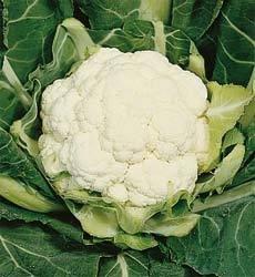 cauliflower-all-year-round-1100-finest-seeds