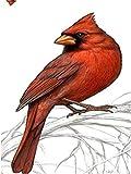 XDXART DIY Ölgemälde Malen nach Nummer Kit für Kinder Erwachsene Anfänger 16x20 Zoll - Roter Vogel auf der Niederlassung, Zeichnen mit Pinsel Weihnachtsdekor Dekorationen Geschenke (Ohne Rahmen)