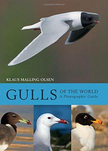 Gulls of the World: A Photographic Guide (Reihenfolge Der Pfeil)