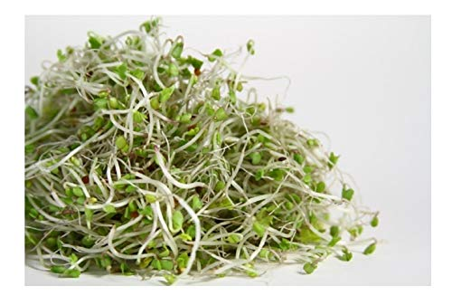 ORGANIC  SPROUTING SEEDS SALAD RAPE   200GM