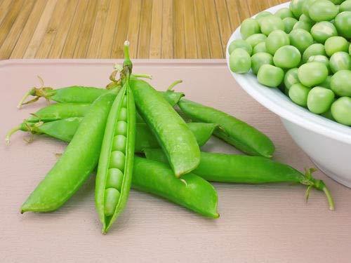 PLAT FIRM GRAINES DE GERMINATION: 200 graines: pois Green Arrow non OGM ErbstÌck Garten GemÌsesamen aussÀen Keine GMO USA