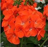 VISTARIC Gelb: Bestselling 100pcs Bunte Oleander New Seeds Schöne Blumensamen der angehende Rate 95% Gartenpflanze für Kind-Geschenk