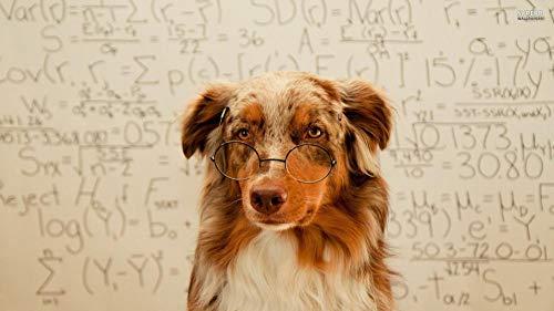 Lhyxh DIY 5D Diamant Malerei Stickerei Kreuzstich Mosaik Nadelarbeiten Kristall Strass Stickerei Basteln Netter Hund mit Brille