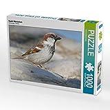 CALVENDO Puzzle Spatz Männchen 1000 Teile Lege-Größe 64 x 48 cm Foto-Puzzle Bild von Mahrhofer Verena