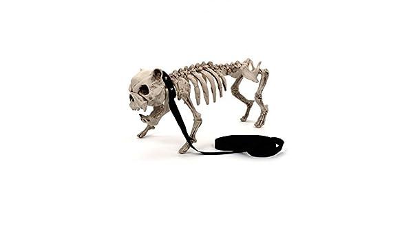 45/cm Wifmann 01373/Squelette Chien avec Laisse