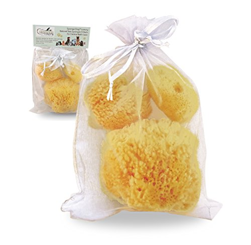 Constantia Pets Sponge Dog™ Luxury Natural Sea Sponges (3pc) for Canine Bath Care & Pet Grooming: Gentle & Hypoallergenic