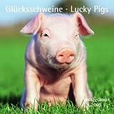 Glücksschweine - T & C-Kalender 2009 -