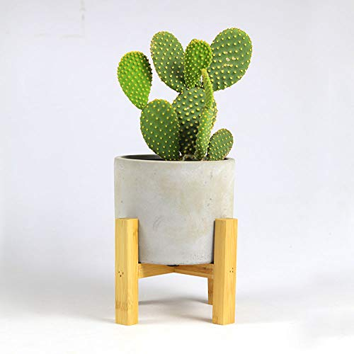 Paudhe Se Yaari Mid Century Modern Planter Pot with Wooden Stand for Indoor Plants Succulents and Cactus. Cement Pot Planter Ideal for Home, Office, Desk and Tabletop Décor.