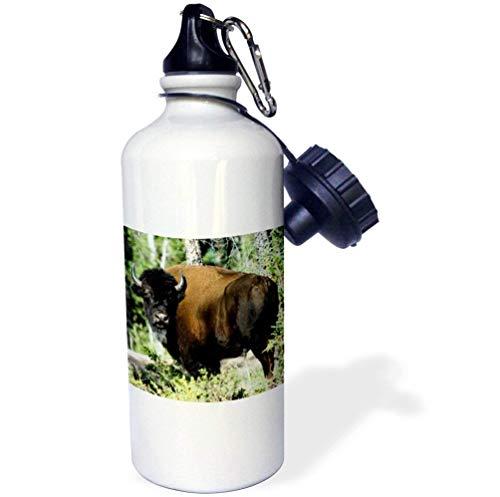 qidushop Bison Wildlife Wood Buffalo NP NW Territoires Blanc Funny Bouteille d'eau en Acier Inoxydable pour Femme Homme Enfants 595,3 Gram
