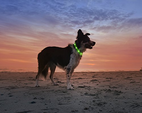 LED-Dog-Necklace-Collar-USB-Rechargeable-Loop-Available-in-6-Colors-Makes-Your-Dog-Visible-Safe-Seen-Green