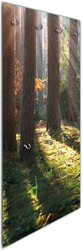 Wallario Wandgarderobe aus Glas in Größe 50 x 125 cm in Premium-Qualität, Motiv: Sonnenstrahlen im Herbstwald | 7 Kleiderhaken zum Aufhängen von Jacken