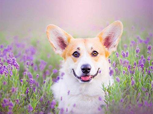 Mzohqn DIY Diamant Malerei DIY Pet Photo Custome Diamantstickerei, Welsh Corgi Dog, 5D Diamantmalerei, Kreuzstich, 3D, Diamantmosaik, Handarbeit Größe:40 * 50 cm