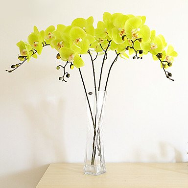 SHENCHI Butterfly orchid pu ,