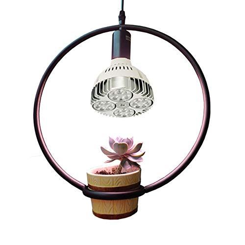 25W Flower/Topf/Sukkulente Tischlampe, Indoor Fill Light Vollspektrum mit Clip Micro Landscape LED Growing Light -